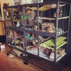 DIY Ferret Cage Idea #3