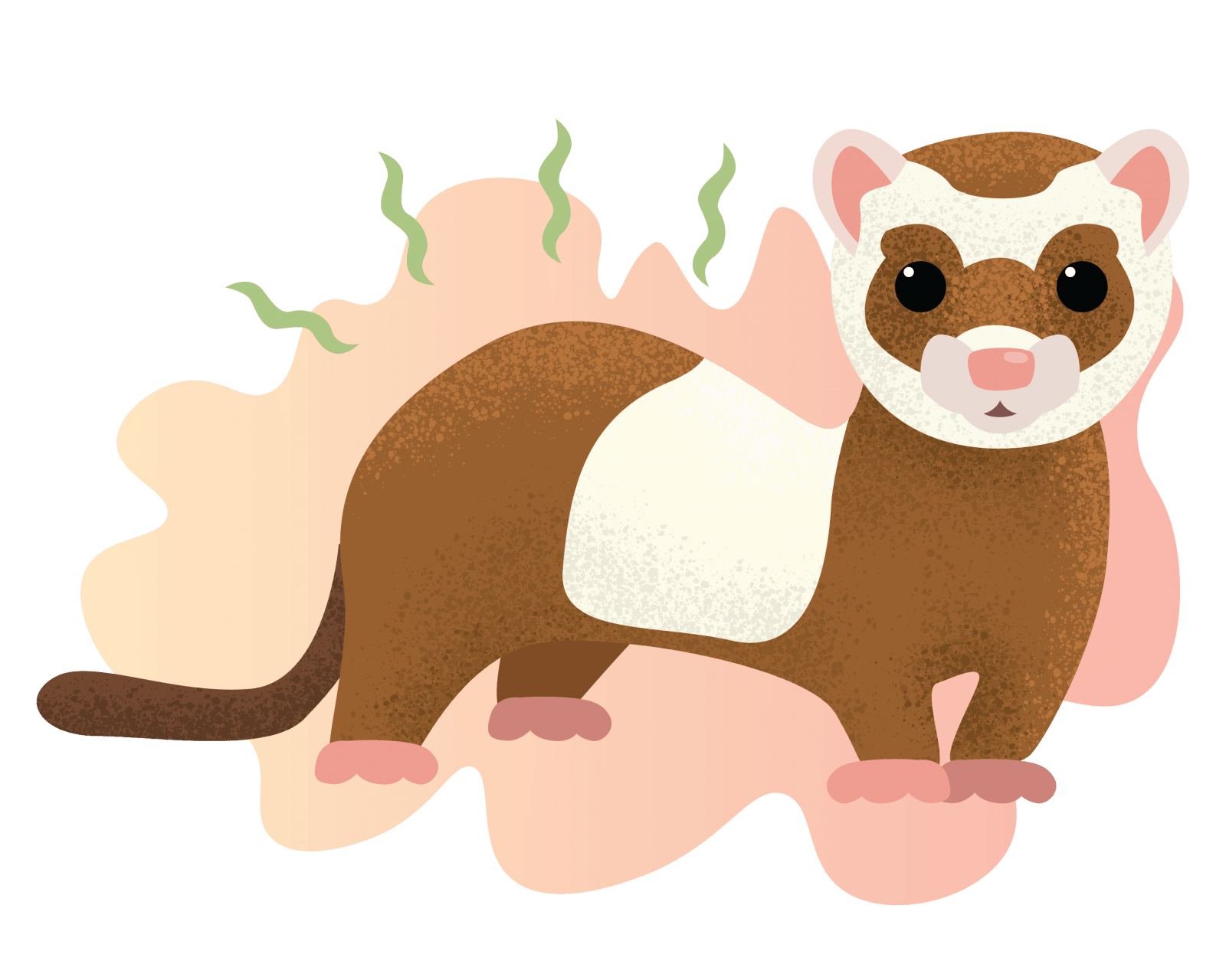 Illustration of a smelly ferret